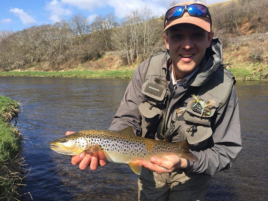 Brown Trout on the River Tweed