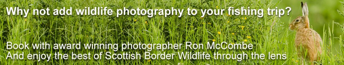 Book Wildlife Photography in the Scottish Borders with Award Winning Photographer Ron McCombe