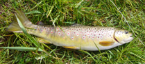 Latest news from the River Tweed